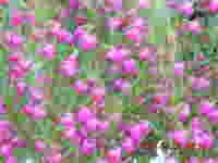 Dscn0730