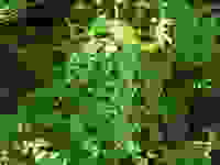 Dscn1617