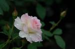 Flower4_1