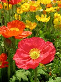 Flower5_2
